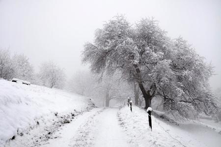 Footpath through the winter landscape  photo