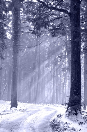 Sun beams shinning on a winter forest path, toned blue