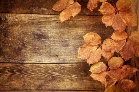 Autumn leaves on wooden background photo