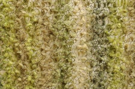 novelty: Green moss yarn knit background Stock Photo