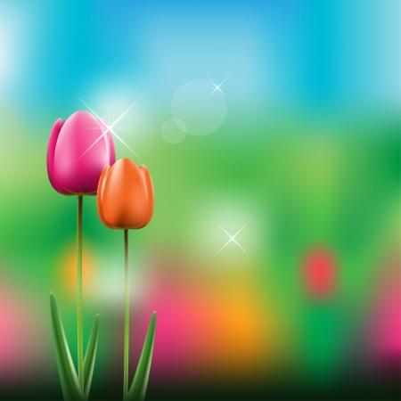 Tulips Vectores