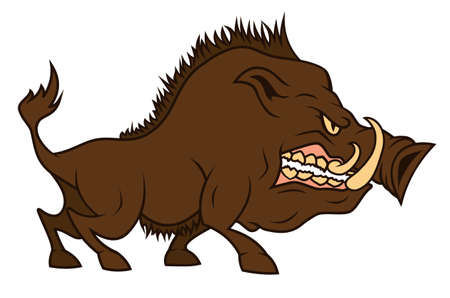 An angry boar  bares one s teeth Vector