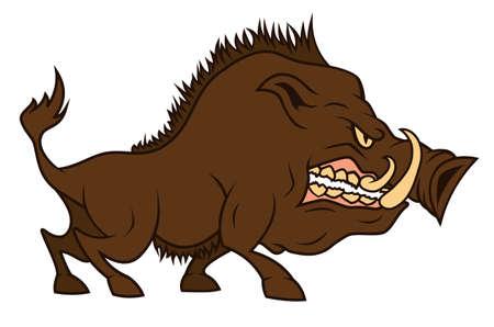 wildschwein: Ein wütender Eber fletscht ein Zähne