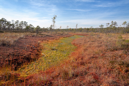 natural landscape in the boggy reserve Stock Photo