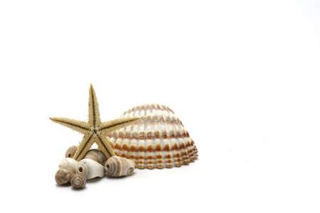 sea shells, and starfish