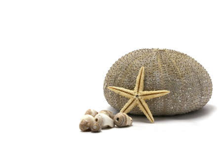 Sea urchin, sea shells, and starfish - all in focus focus Stock Photo