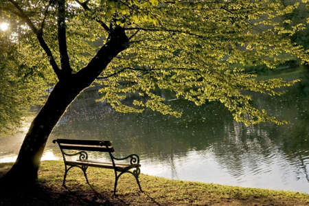 water  scenic: Bench under the tree by the riverside. Stock Photo