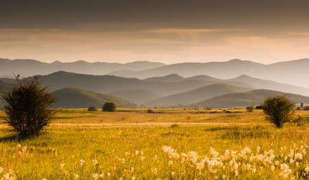 Meadow and hills on a summer evening