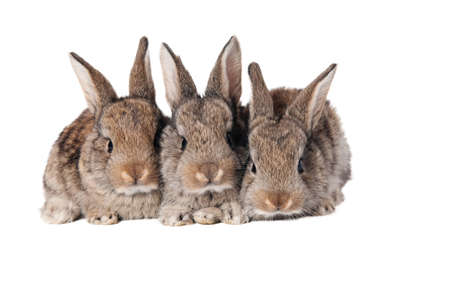 Three cute bunnies isolated on white background