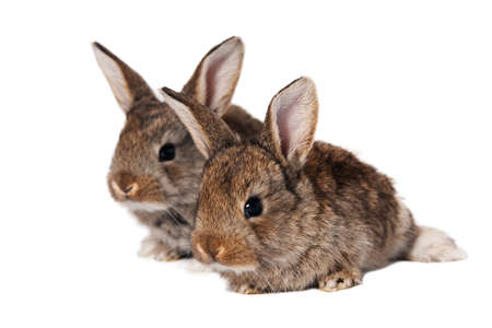 Two cute bunnies isolated on white background Stock Photo
