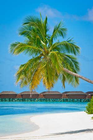 clear blue sky on the beach in tropical paradise