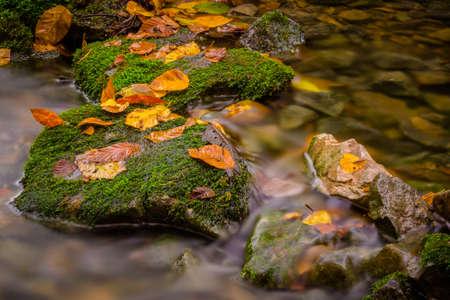 Autumn stream among green stones