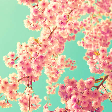 Vintage pink cherry blossoms