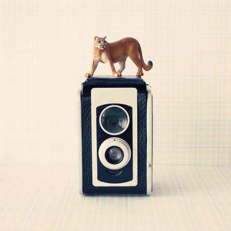 black squirrel: Vintage analogue camera with a puma