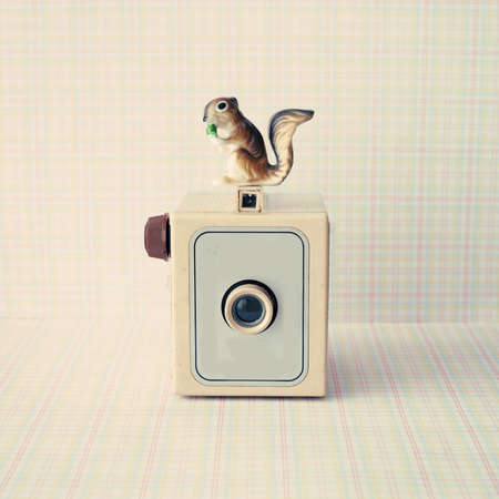 Vintage analogue camera with a squirrel photo