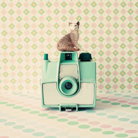 Vintage analogue camera with a cat photo
