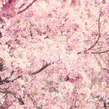 春にピンクの花と木 写真素材