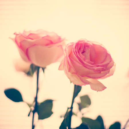 tattered: Vintage pink roses Stock Photo