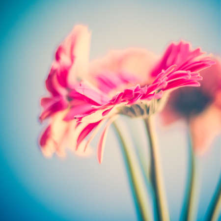 tattered: Vintage pink flowers