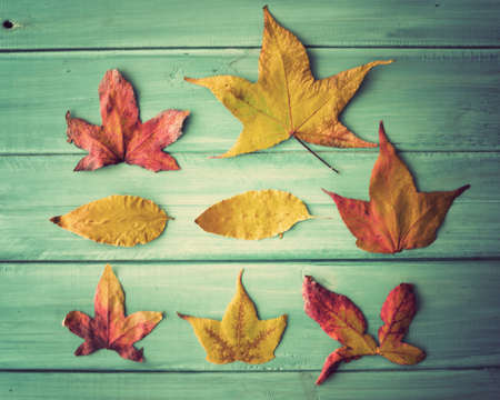 autumn leafs: Autumn leafs over turquoise wood