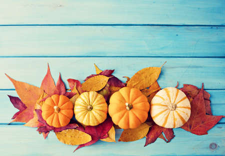 Pumpkins and autumn leafs over turquoise wood Foto de archivo