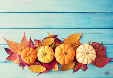azul turqueza: Calabazas y hojas de otoño sobre la madera de color turquesa Foto de archivo
