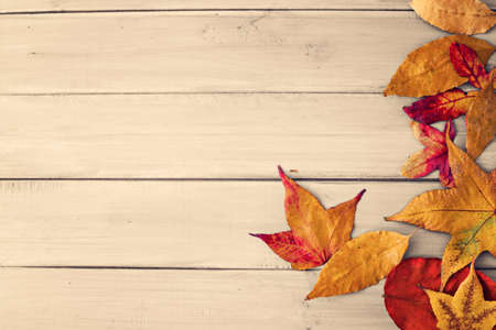 Autumn leafs over pale wood Standard-Bild