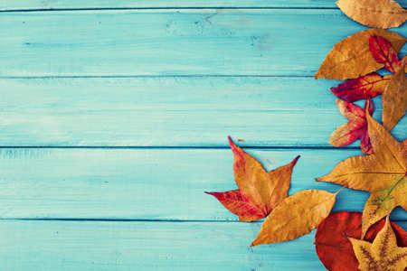 秋葉ターコイズ木上