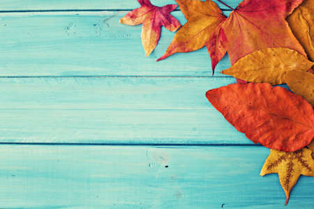 De herfst doorbladert over turquoise hout Stockfoto