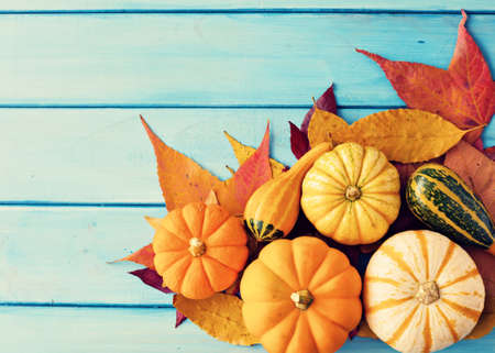 ターコイズ ブルー ウッド以上カボチャと秋を葉します。
