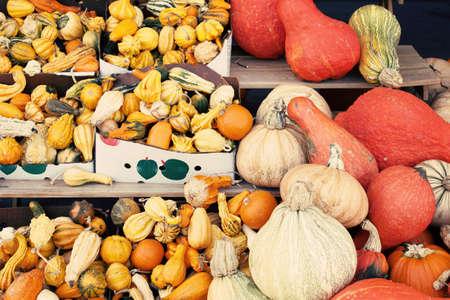 Pumpkin autumn harvest