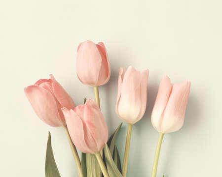 ヴィンテージのピンクのチューリップ 写真素材
