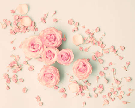 rosas rosadas: Pink roses over pastel background Foto de archivo