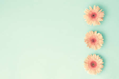 Pink daisies over mint background 스톡 콘텐츠