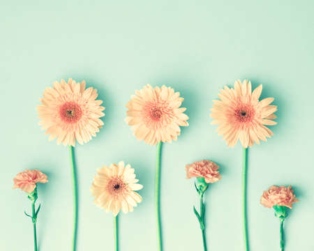 feminine background: Pink daisies and carnations over mint background