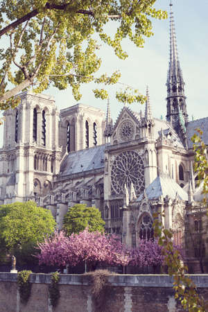 Notre Dame Cathedral and cherry blossoms in spring