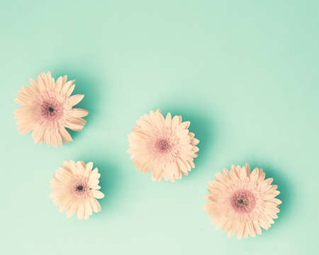 Pink daisies on mint flat lay