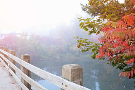 Vintage autumn or fall foliage Banco de Imagens - 84176569