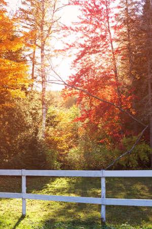Vintage autumn or fall foliage Banco de Imagens - 84176572