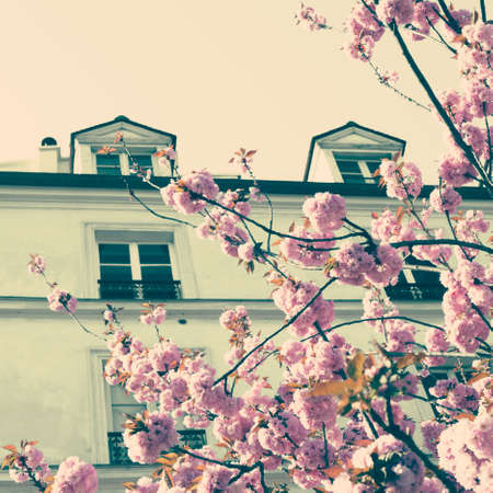 Vintage building in Paris with Cherry Blossoms