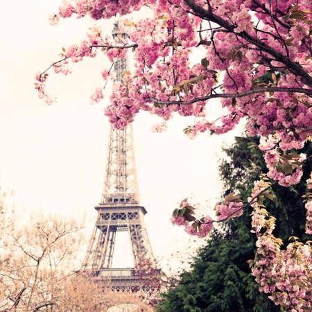 Eiffel Tower and cherry blossoms Banco de Imagens