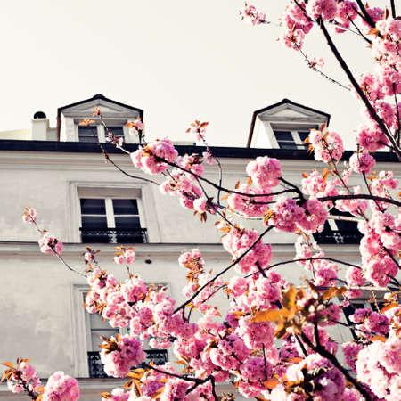 Vintage building in Paris with Cherry Blossoms Banco de Imagens - 88449166