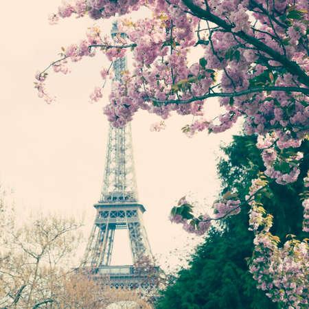 Eiffel Tower and cherry blossoms Banco de Imagens - 88449167