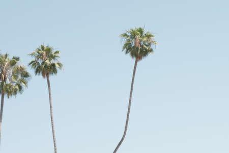 Palm trees in a beach in California Banco de Imagens