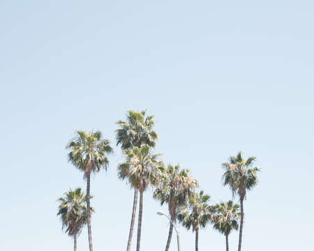 Palm trees in a beach in California 写真素材
