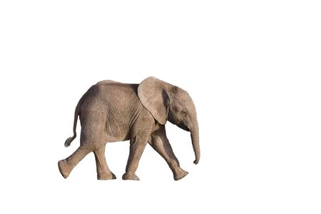 elefante: Beb� elefante africano en Sud�frica