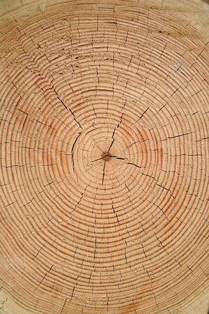 fiambres: Anillos de año de un viejo árbol
