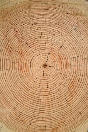 cold cuts: Year rings of a old tree