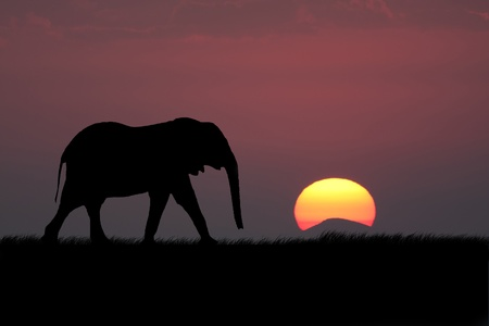 Elephant silhouette with red sunset in south africa