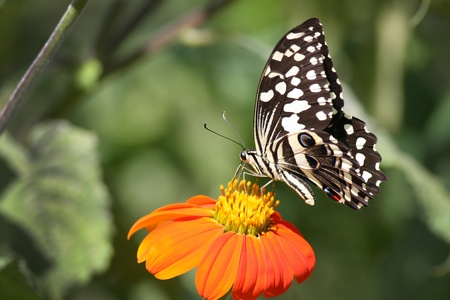 Stunning colourfull butterfly on flower photo